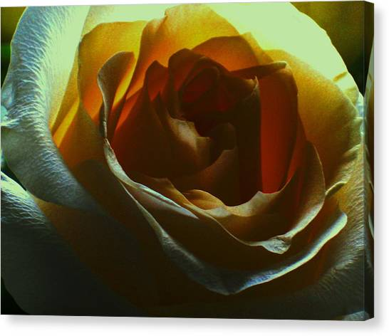 Beauty Within Canvas Print by Erika Lesnjak-Wenzel