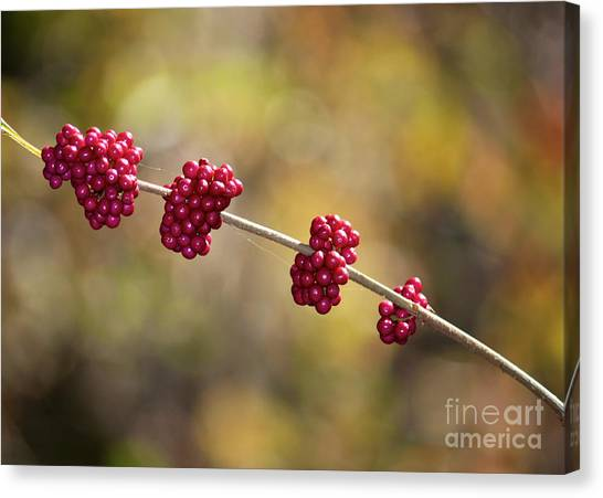 Wild Berries Canvas Print - Beautyberry With Bokeh by Carol Groenen