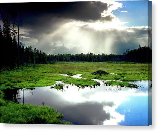 Beaver Meadow Canvas Print