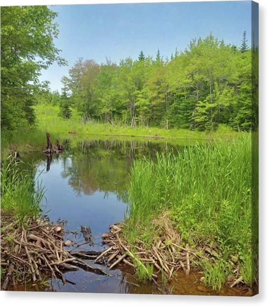 Beavers Canvas Print - Beaver Pond, Cape by Stewart Calder
