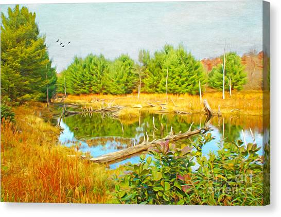 Beavers Canvas Print - Beaver Pond by Laura D Young