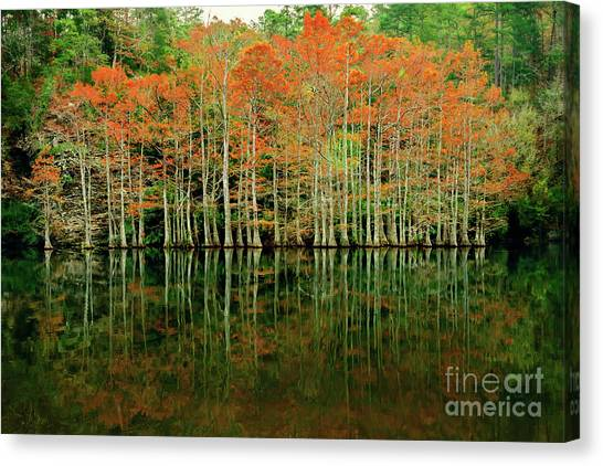 Beaver's Bend Cypress All In A Row Canvas Print