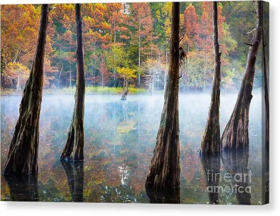 Beavers Canvas Print - Beavers Bend Cypress Grove by Inge Johnsson