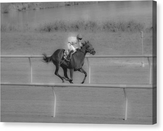 Bay Thoroughbred Horse Canvas Print - Because I Want To by Betsy Knapp