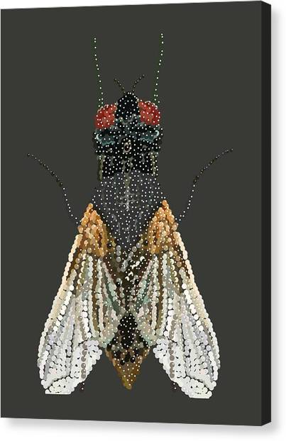 Bedazzled Housefly Transparent Background Canvas Print