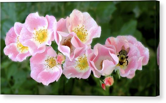 Bee And Roses Canvas Print