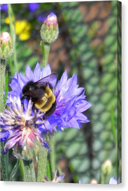 Bee Bee Canvas Print by Peter Mowry