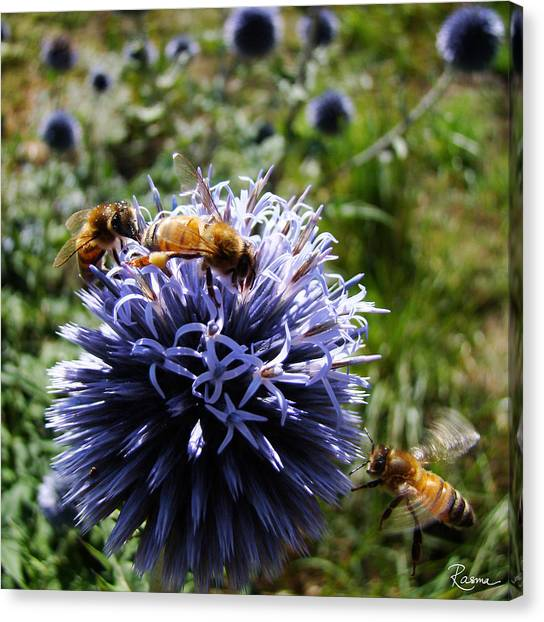 Bee Circles Canvas Print