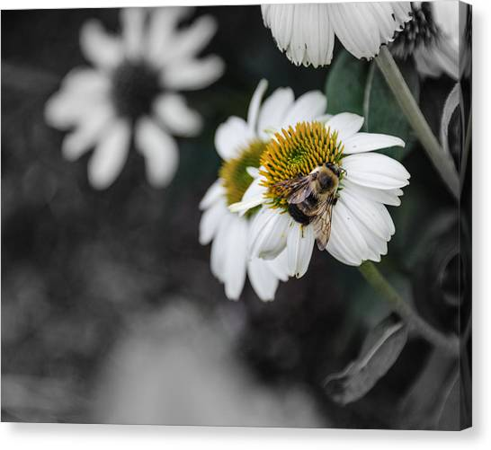 Bee Daisied Canvas Print