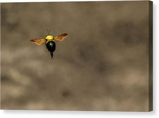 Bee Dance Canvas Print