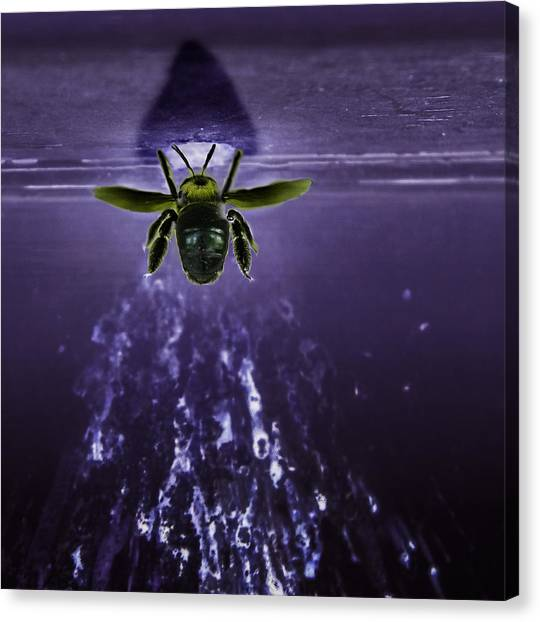Bee Drilling Wood Canvas Print