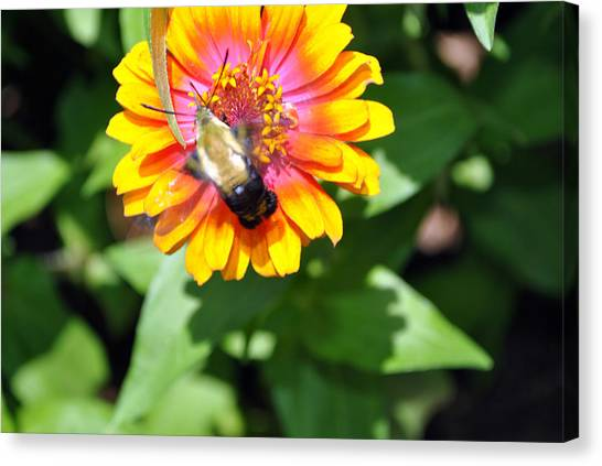 Bee Easy Canvas Print by Dion Baker