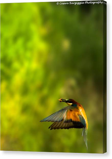 Bee Eater Canvas Print
