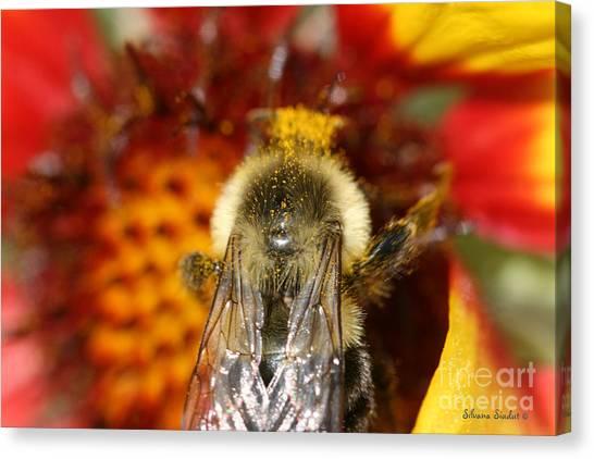 Bee Five - Canvas Print by Silvana Siudut