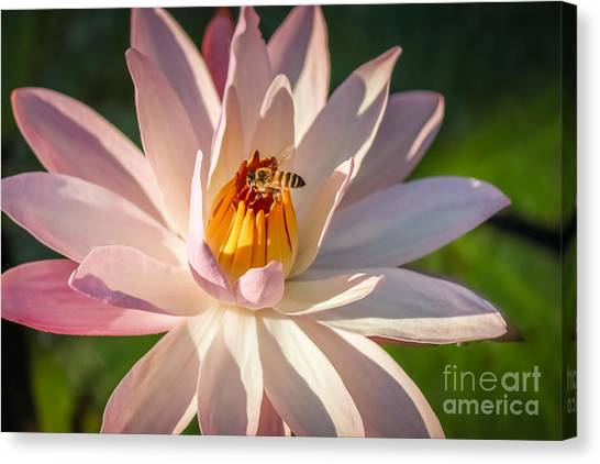 St. Lucie County Canvas Print - Bee Goodness by Liesl Walsh