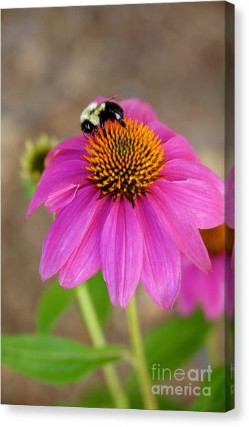 Canvas Print - Bee Happy by Megan Cohen