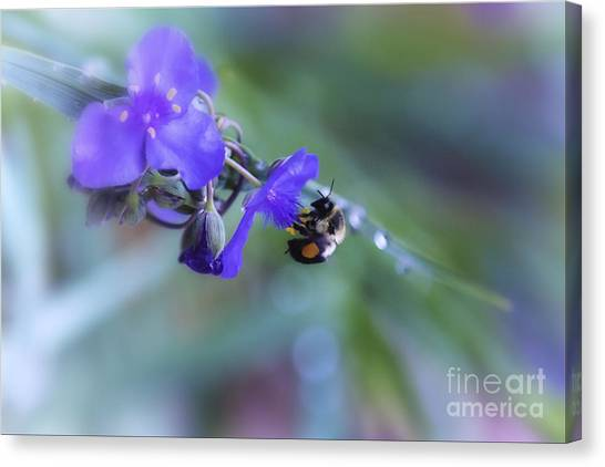 Rights Managed Images Canvas Print - Bee Harmony by Mary Lou Chmura