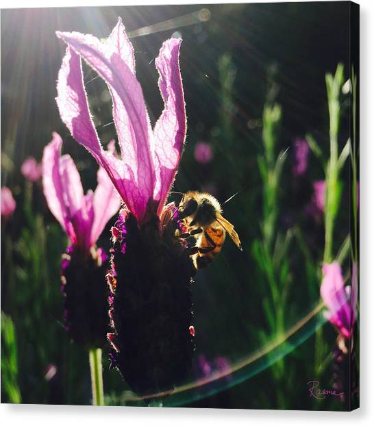 Bee Illuminated Canvas Print