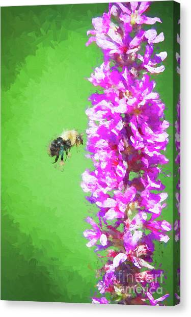 Bee Kissing A Flower Canvas Print