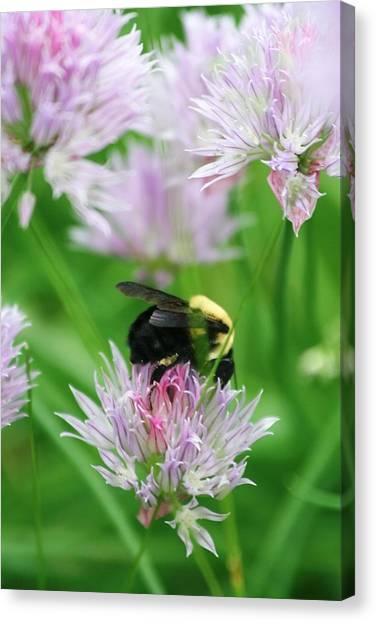 Bee Canvas Print by Melanie Beasley