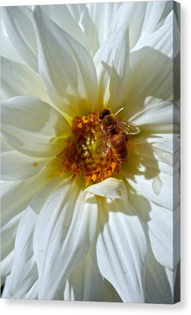 Bee Nice Dahlia  Canvas Print