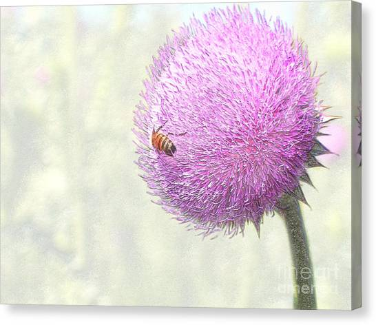 Bee On Giant Thistle Canvas Print
