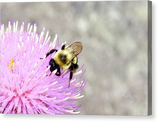 Bee On Pink Bull Thistle Canvas Print