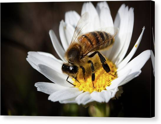 Bee On The Flower Canvas Print