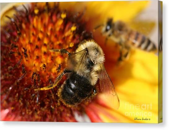 Bee One Canvas Print by Silvana Siudut