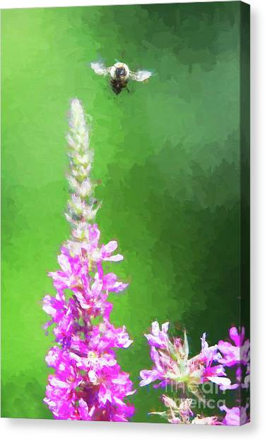 Bee Over Flowers Canvas Print