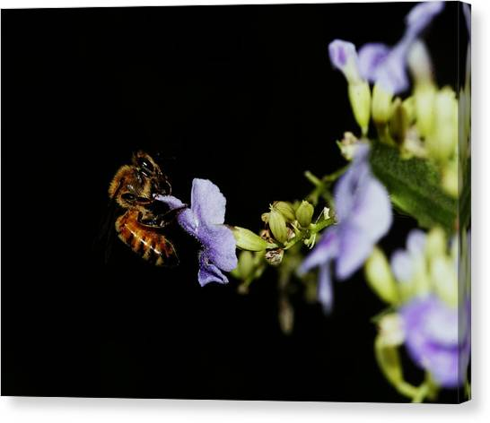 Bee Portrait Canvas Print