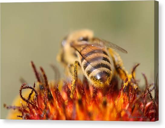 Bee Three Canvas Print by Silvana Siudut