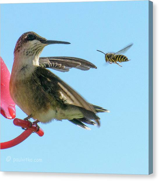 Bee_bird Canvas Print