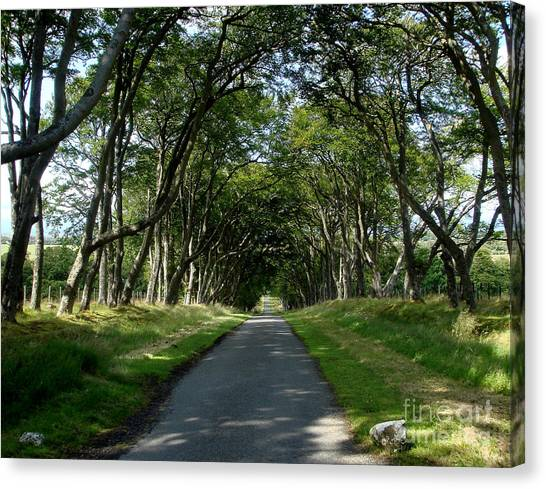 Beech Avenue Canvas Print