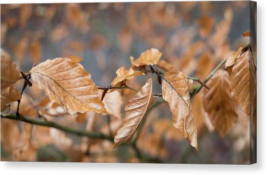 Beech Garland 3 Canvas Print