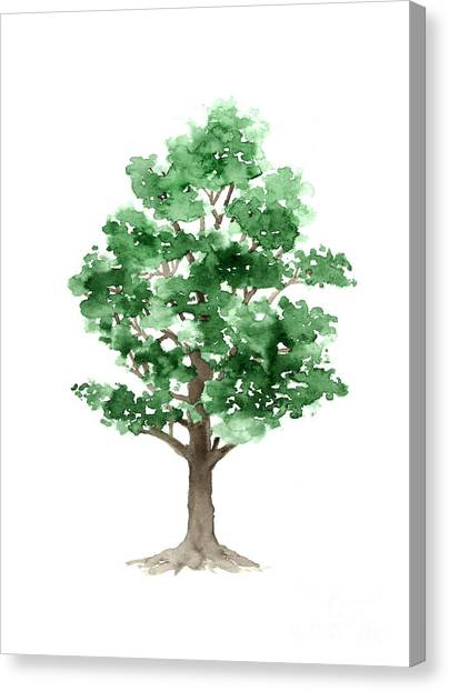 Trees Canvas Print - Beech Tree Minimalist Watercolor Painting by Joanna Szmerdt
