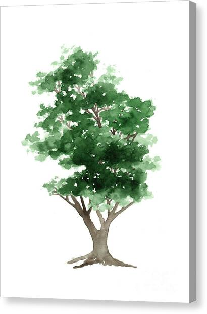 Watercolor Canvas Print - Beech Tree Silhouette Watercolor Art Print Painting by Joanna Szmerdt