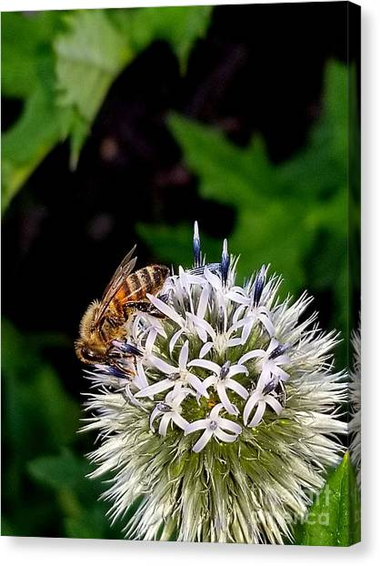 Beeing Seen Canvas Print