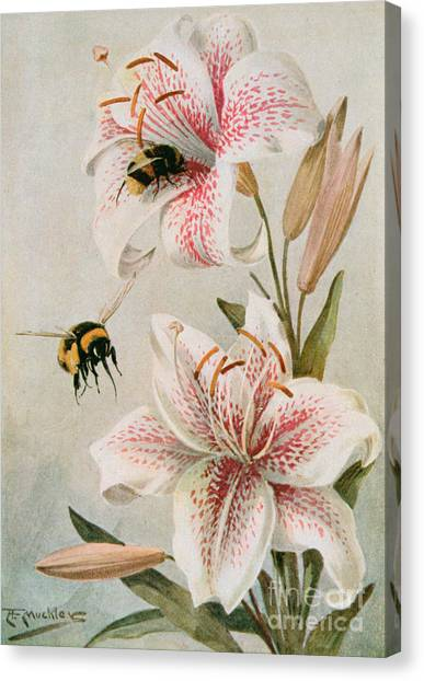 In Bloom Canvas Print - Bees And Lilies by Louis Fairfax Muckley