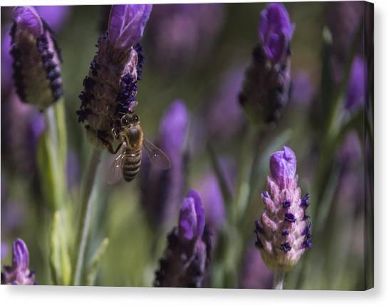 Bee's Delight Canvas Print