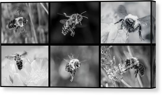 Bees In Flight In Black And White Canvas Print