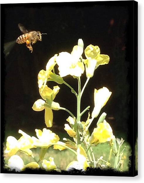 Bees Love Broccoli Canvas Print