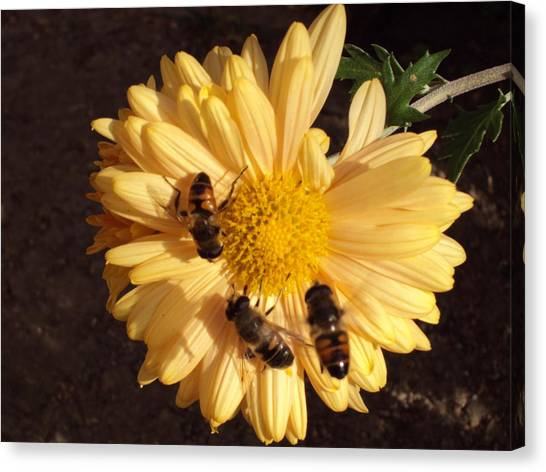 Bees On Feast Canvas Print by David Du Hempsey