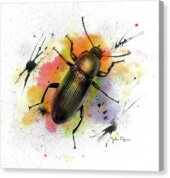 Beetle Illustration Canvas Print