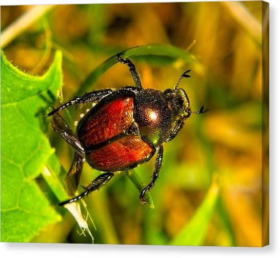 Beetle Take-off Canvas Print by Pradeep Bangalore