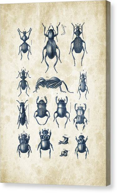 Bugs Canvas Print - Beetles - 1897 - 01 by Aged Pixel