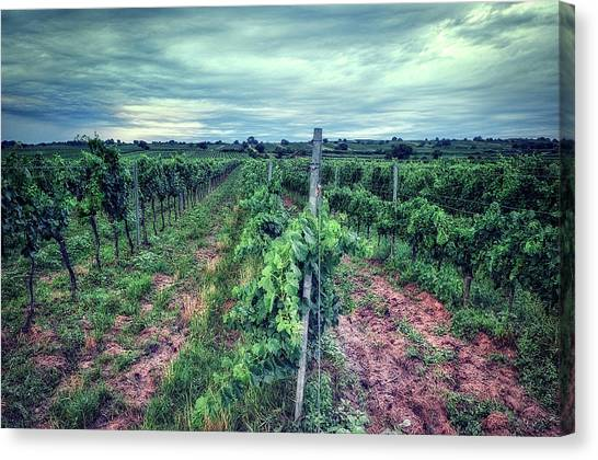 Before The Harvesting Canvas Print