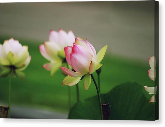 Canvas Print featuring the photograph Beginnings by Mike Trueblood