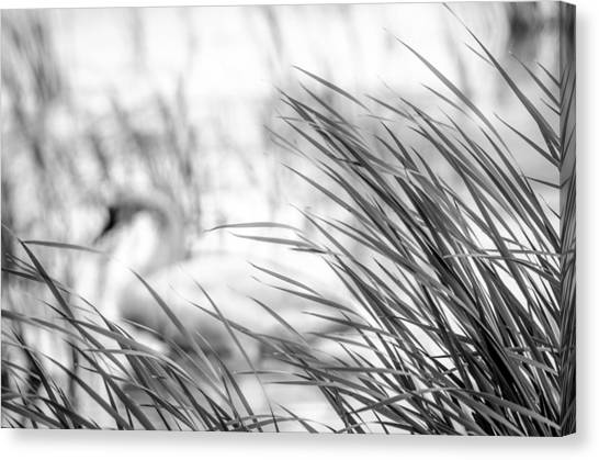 Behind The Grass Canvas Print