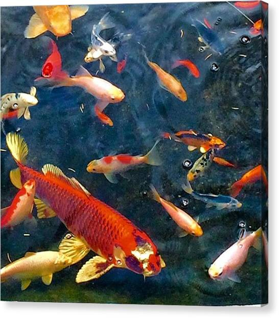 Koi Canvas Print - Being Koi At One Of My Listings by John Repoza